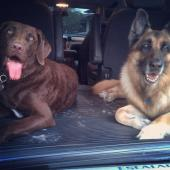 Great pic of my dogs coming with me to the airport before I go on tour! They hated!