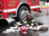 An Everett firefighter resuscitating a dog injured in a fire a couple of days ago.  I hear there was a second dog as well and that both are