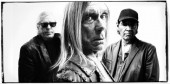 Photo of Iggy and The Stooges
